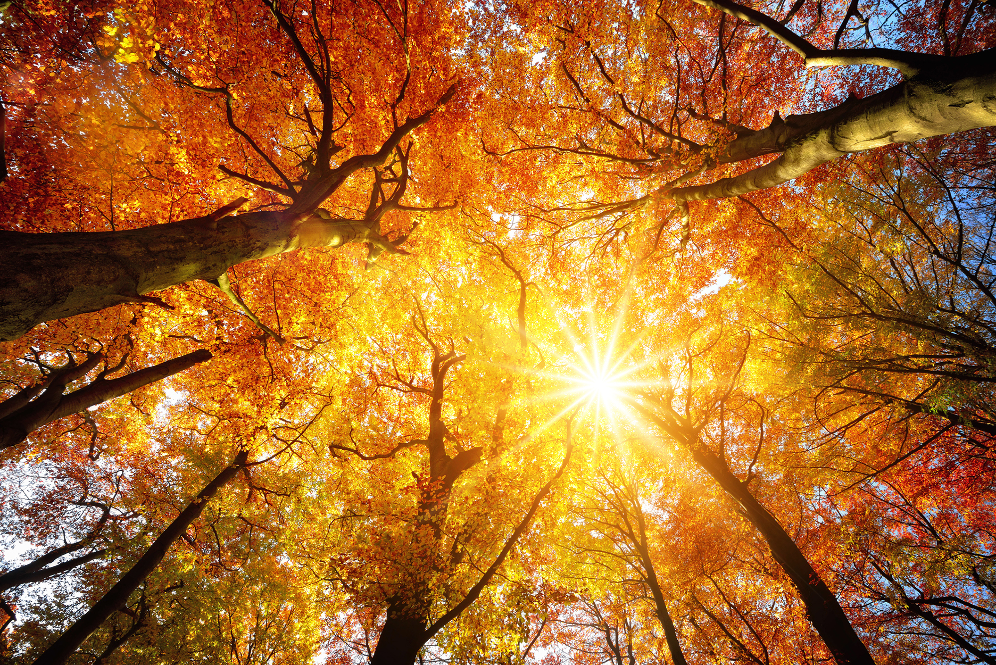 growing-trees-in-autumn_center-for-god-forvaltning
